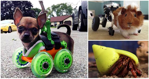 3D printing animals