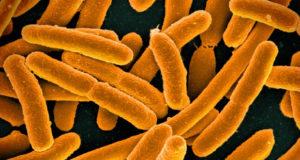bacterias impresas en 3D