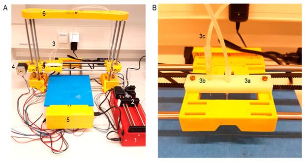 bactéries imprimées en 3D
