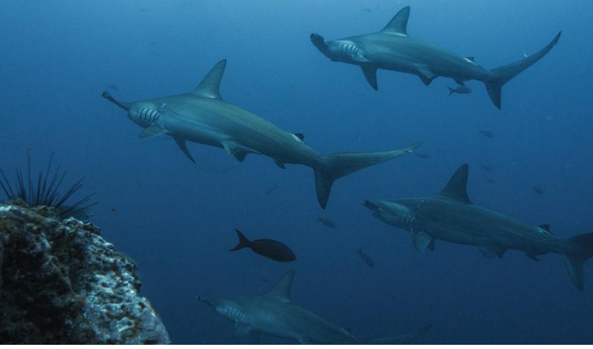3D-gedruckte Haifischflossen