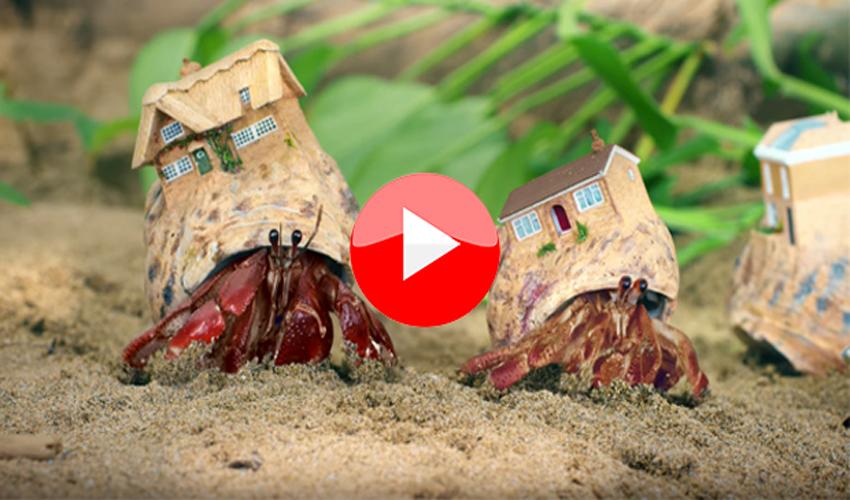 TOP5 Videos der Woche: Schildkrötenroboter und Krebse auf Wohnungssuche etc.