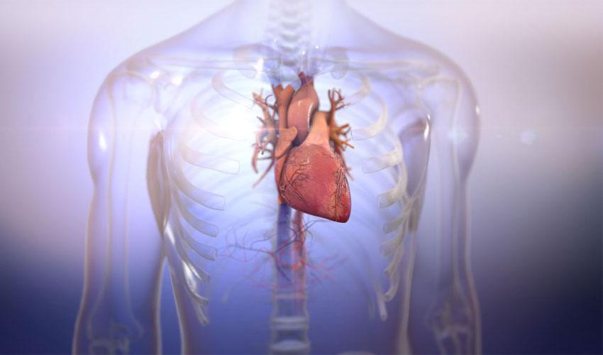 BIOLIFE4D druckt erfolgreich menschliches Herzgewebe - 3Dnatives