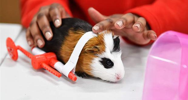 3D Druck Tiere