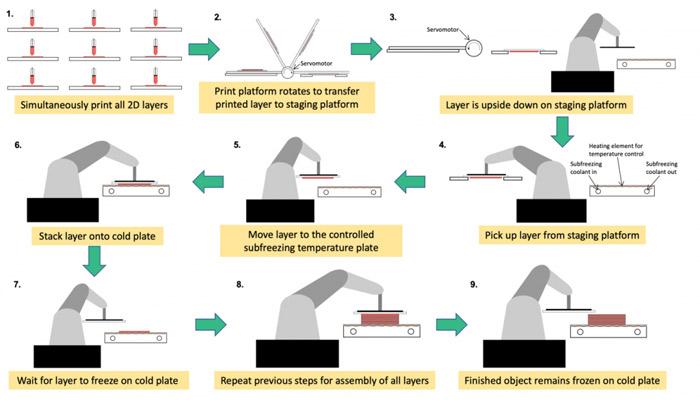 beschleunigtes 3d bioprinting