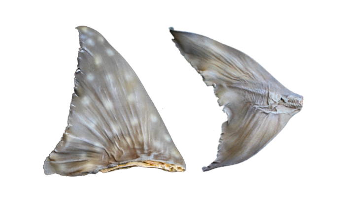 3D Printed Shark Fins