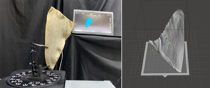 3D-gedruckte Haiflossen