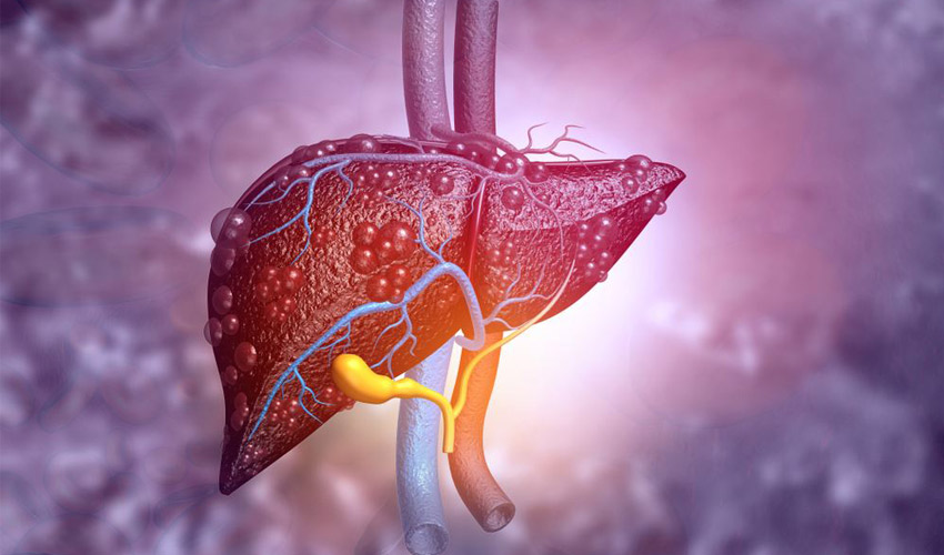 bioprint small liver