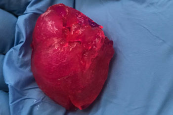 BIOLIFE4D bioprints small human heart for the first time in the U.S.