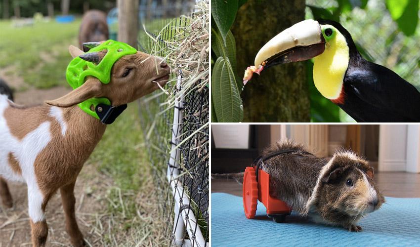 Los animales que recibieron ayuda de la impresión 3D