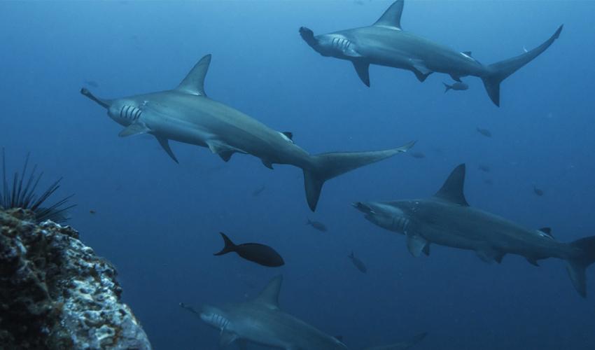 aletas de tiburon 3d