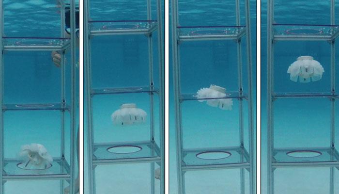 medusas robot
