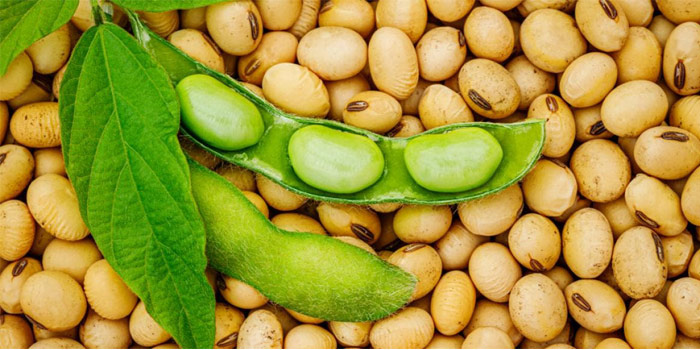 soy could be used for 3D printing