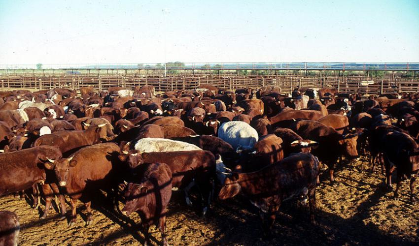 L'Australian Meat Processor Corporation