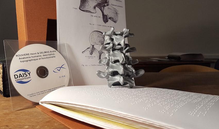 Des modèles anatomiques 3D pour former des étudiants malvoyants