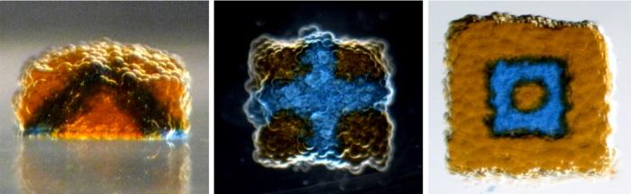 Les milliers de gouttes d'eau contenant les cellules synthétiques