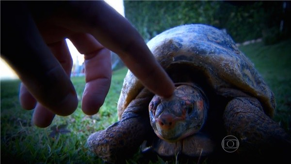 La tortue Fred, peu de temps après l'incendie qui est venu endommager lourdement sa carapace