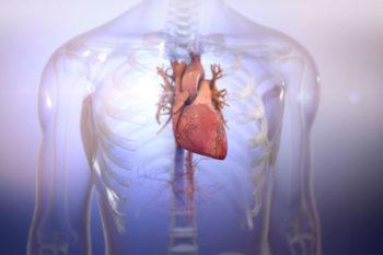 BIOLIFE4D bio-imprime avec succès des tissus cardiaques humains