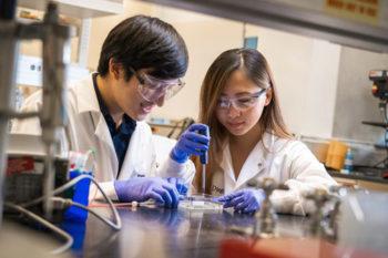 Une méthode de bio-impression simplifiée pour créer des vaisseaux sanguins
