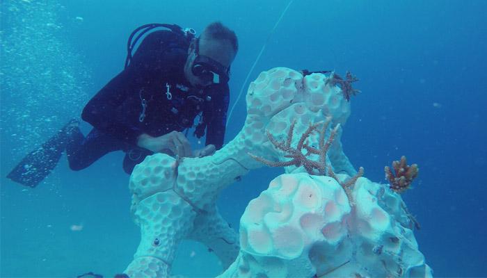 coral reef printed in 3D